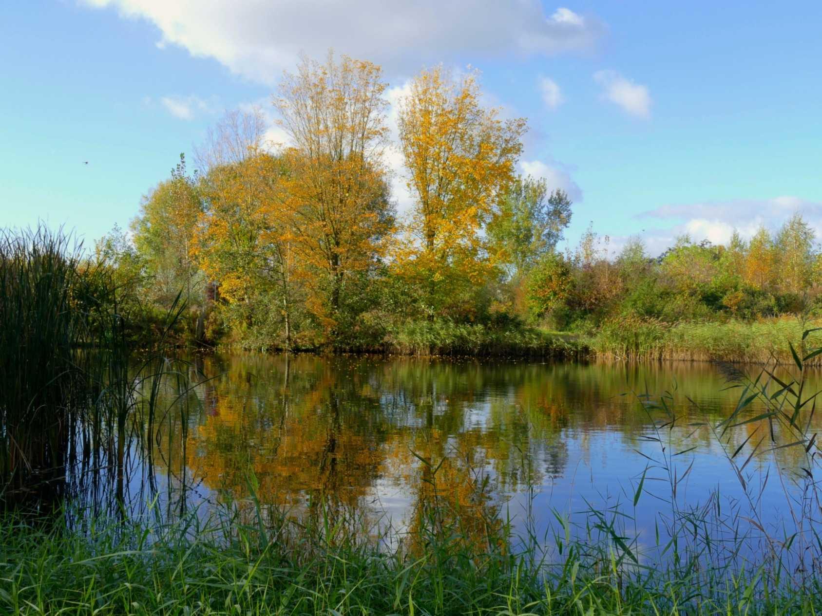 Biodiversiteit Het natuurpark bevat een bosgedeelte van 10 ha. groot.