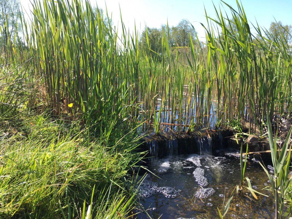stromend water rietkreek